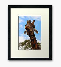 Happy Giraffe Framed Print