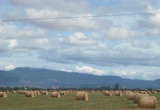 Hay rows - Junction City, Oregon by EAS77
