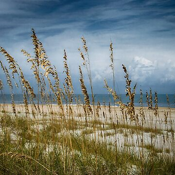 Through the Sea Oats by designingjudy