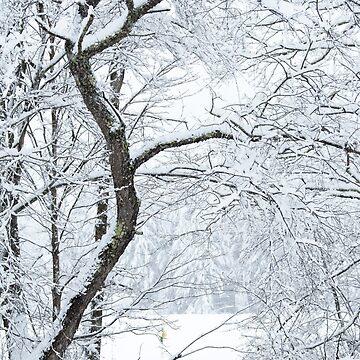 November Vermont Snow by srwdesign