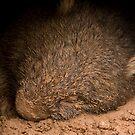 sweet muddy slumber by tarnyacox