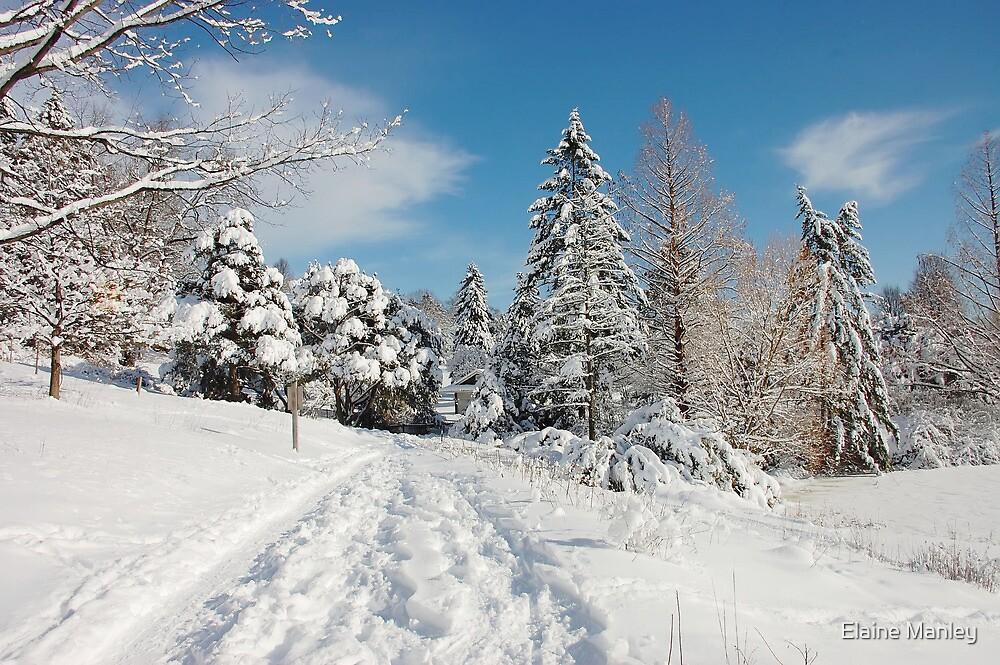 Winter Scenes 3 by Elaine  Manley