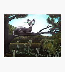 Super cat Photographic Print