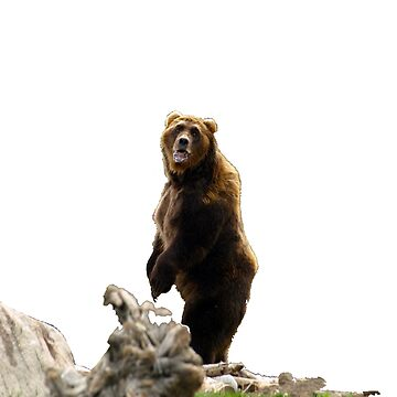 Annoyed Bear by ChadKroll