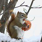 My Winter Treat 2 by Deborah  Benoit