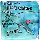 The heart of a blue whale weighs about the same as a gorilla. by Dawn Pedersen