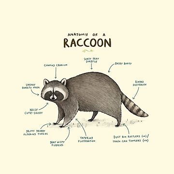 Anatomy of a Raccoon by SophieCorrigan