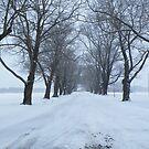 Winter Wonderland by terralee