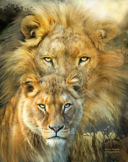 lion and lioness african royalty posters by carol cavalaris