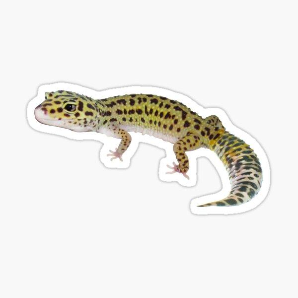 Cute Leopard Gecko Gift I Love Geckos Sticker