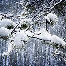 New Fallen Snow by Yukondick