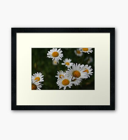 Waiting for Monica - Daisies Framed Print