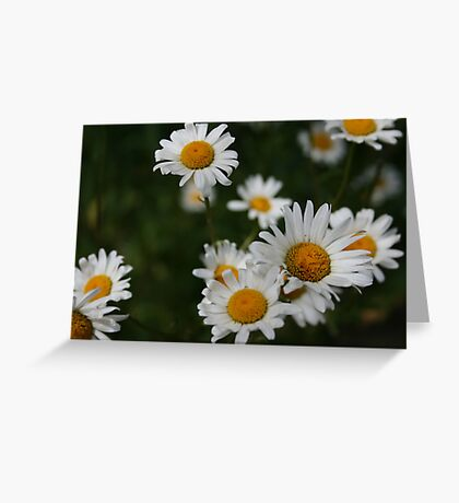 Waiting for Monica - Daisies Greeting Card