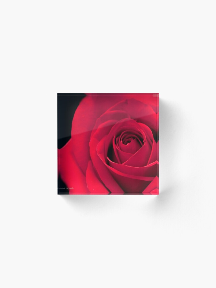 Alternate view of Melodious Rose Acrylic Block