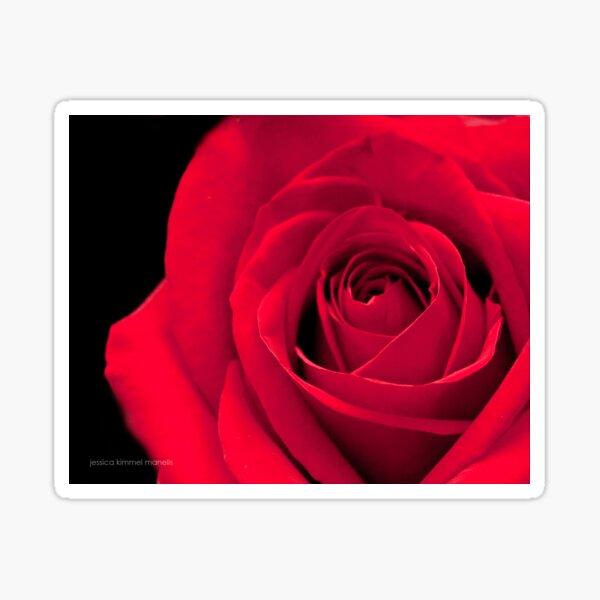 Melodious Rose Sticker