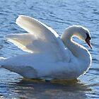 Swan relaxing by henuly1
