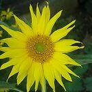 "Golden ""Sun"" Flower by Corkle"