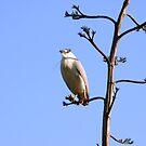 Bird by Vicki Hudson