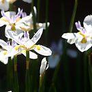 Flowers  by Vicki Hudson