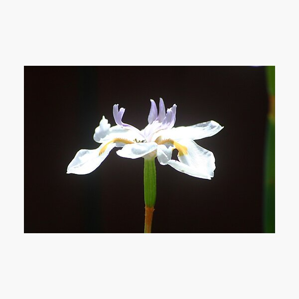 A Flower Photographic Print