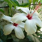 Hibiscus Flower by Vicki Hudson