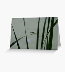 Dragonfly Sihouette Greeting Card