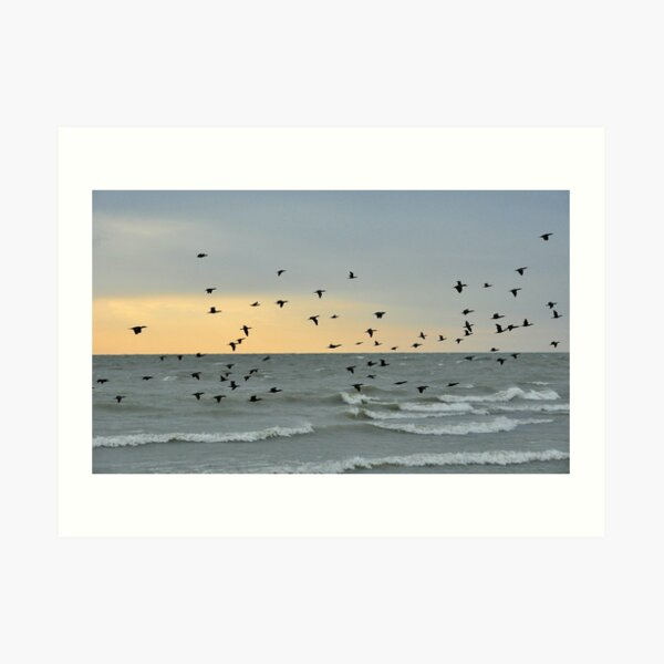 Evening Flight Art Print