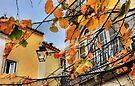 Sintra leaves... by terezadelpilar ~ art & architecture