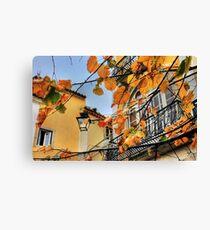 Sintra leaves... Canvas Print