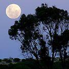 New Year Moon by Lynda Kerr