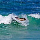 Surfing Sea Lion by Stuart Robertson Reynolds
