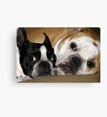 Two of a kind.... Canvas Print