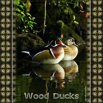 Wood Ducks at Homosassa Springs, Florida by TravlynWomyn
