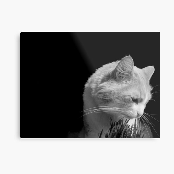 Cat'n Grass 2 Metal Print