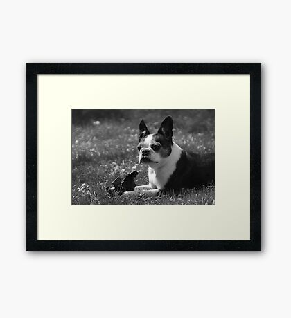 Luci at 9 Framed Print