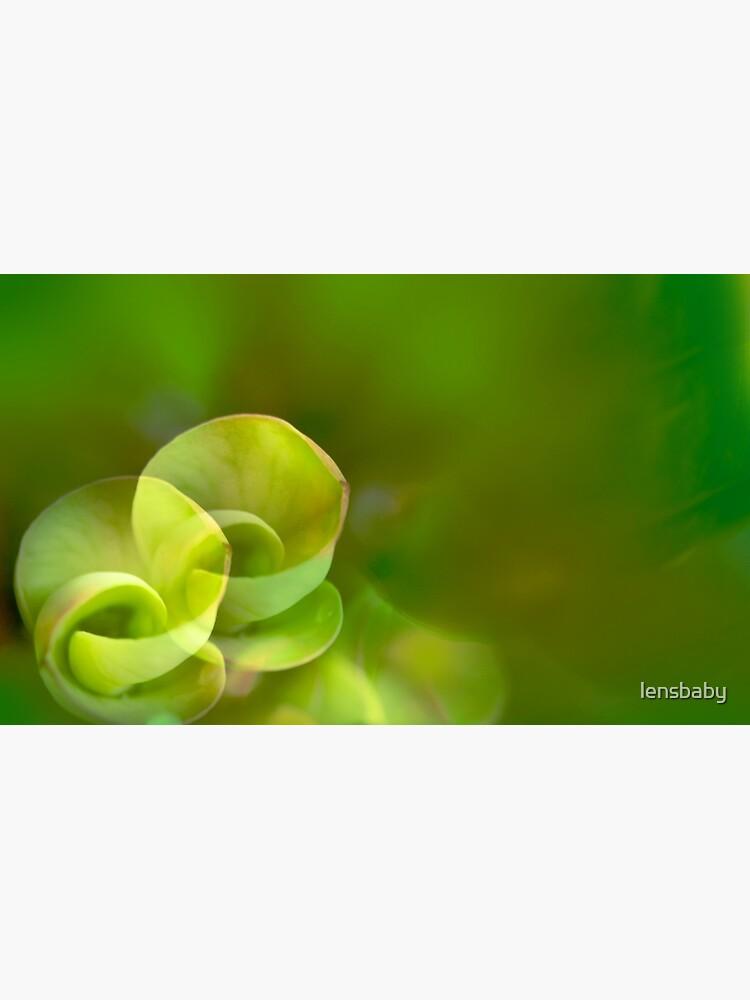 etude in green von lensbaby