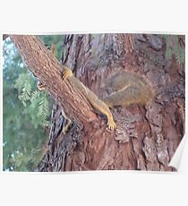 hiding squirrel in the tree Poster