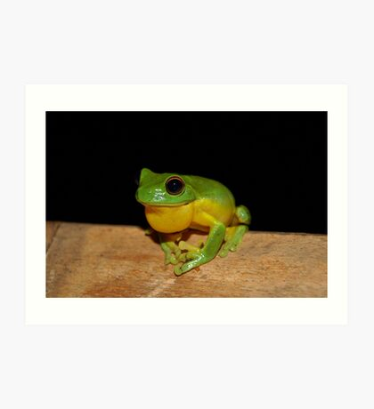 Australian Red Eyed Tree Frog Art Print