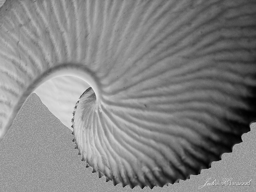 Nautiless shell by Julia Harwood