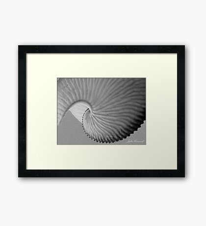 Nautiless shell Framed Print