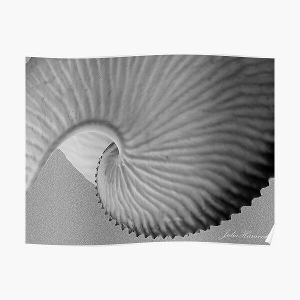 Nautiless shell Poster