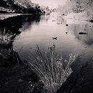 Merri Creek Coburg Lake by Angie Muccillo