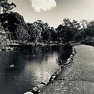 Merri Creek Coburg 2 by Angie Muccillo