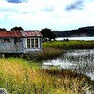 Port Waikato by photohunter