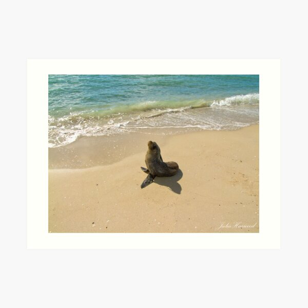 Seal on the Beach Art Print