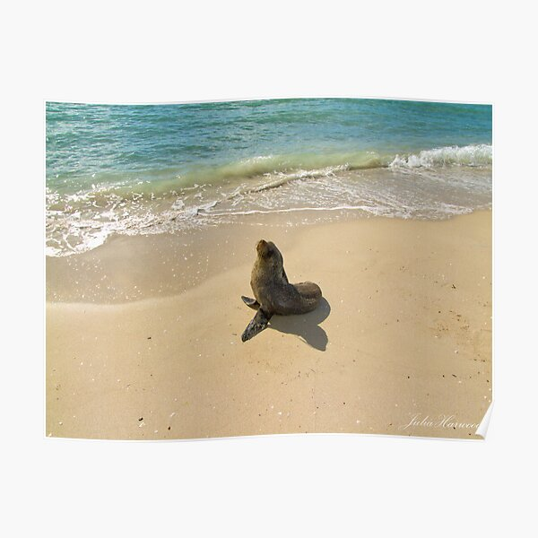 Seal on the Beach Poster