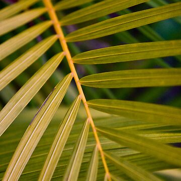 Fern close up by outafocus