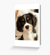 Charlie Girl (Charlotte Rose) at 10 weeks old Greeting Card