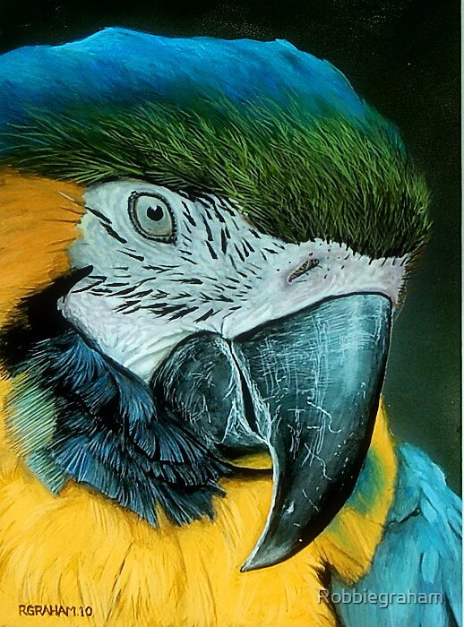 'Blue'. (Painting of a Mackaw.) by Robbiegraham