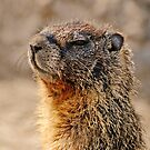 Marmot McCool by Rodney55